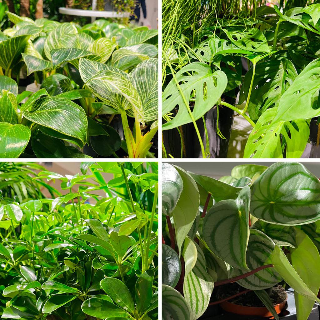 Grønne planter fra Mester Grønn