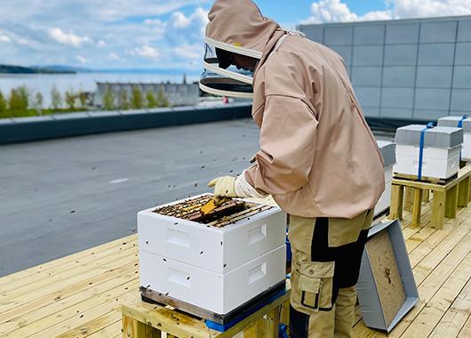 Bikuber på taket til CC Gjøvik
