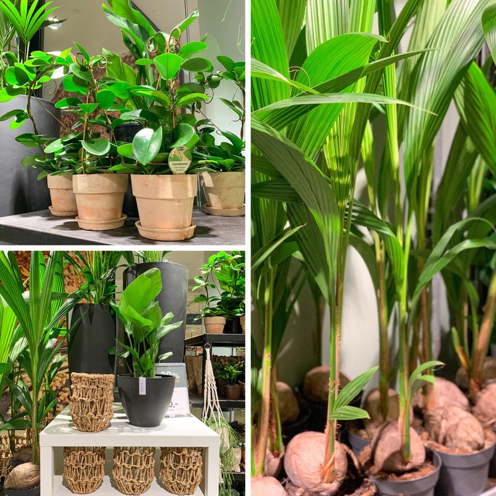 Bilde av grønne planter