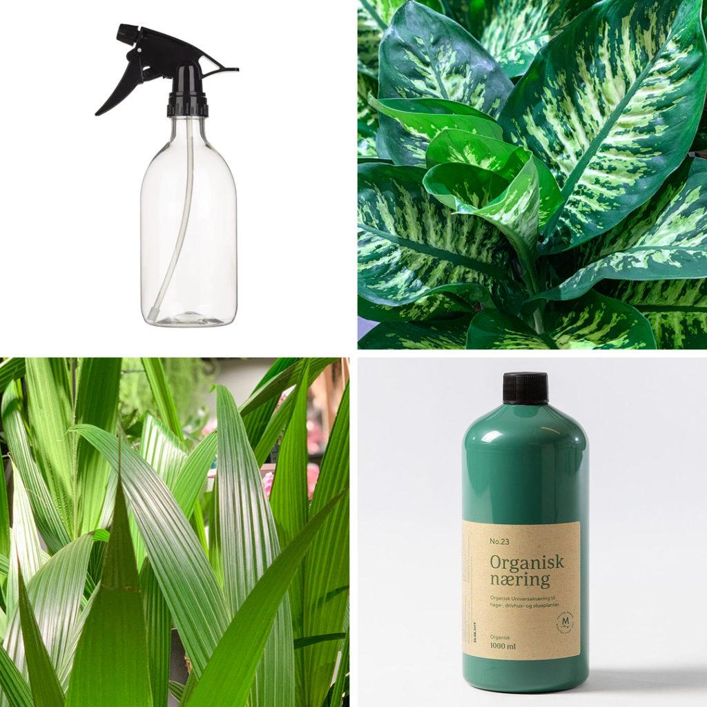 Bilde av stelling av grønne planter