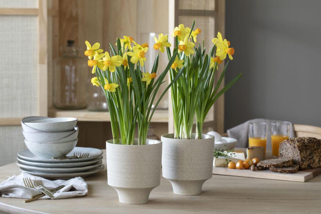 Bord med påskeliljer fra Mester Grønn.